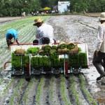Agribank triển khai cho vay vốn theo quyết định 68/2013/QĐ-TTg