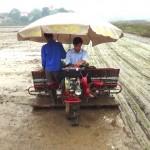 Bắc giang đưa máy cấy vào sản xuất lúa giống