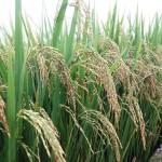 Chính sách tín dụng phục vụ phát triển nông nghiệp, nông thôn