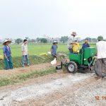Trồng khoai tây bằng máy vụ Đông 2017 tại huyện Thường Tín – Hà Nội