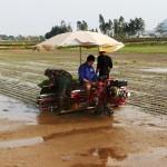 Hiện trạng và giải pháp cấy lúa ở Việt Nam