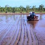 Tình hình cơ giới hóa sản xuất nông nghiệp tại Thái Bình