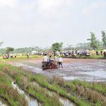 Hà Nội: Ứng Hòa triển khai cơ giới hóa canh tác lúa bằng máy cấy HAMCO