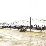 Hà Nam: huyện Kim Bảng đưa máy cấy lúa vào sản xuất