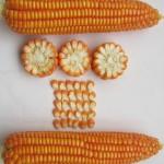 Bổ sung kinh phí mua bù hạt giống cây trồng dự trữ quốc gia
