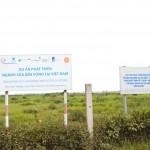 Cơ giới hóa trồng ngô tại vùng chăn nuôi bò sữa bền vững
