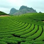 Phê duyệt quy hoạch tổng thể khu và vùng nông nghiệp ứng dụng công nghệ cao