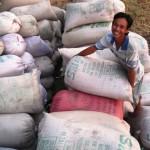 Giá tăng và những cơ hội xuất khẩu của gạo Việt Nam