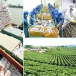 Xuất khẩu 11,4 tỷ USD nông sản trong 5 tháng
